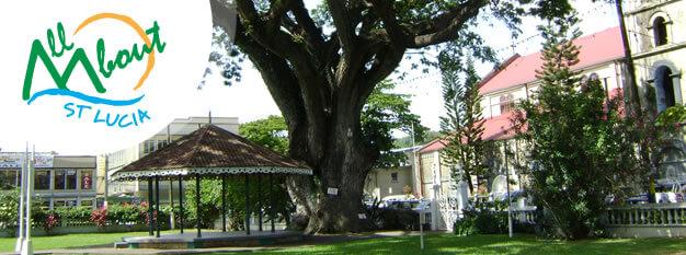 St. Lucia Saman tree at Castries' Derek Walcott Square